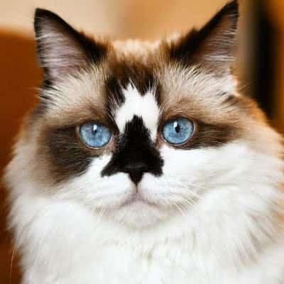 Boutique chat pour vous et votre félin